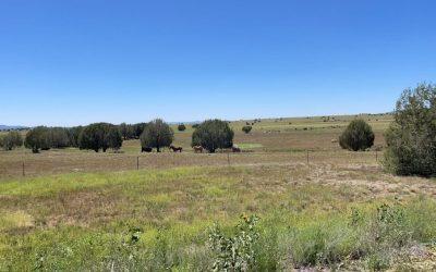 Horse Stud Ranch